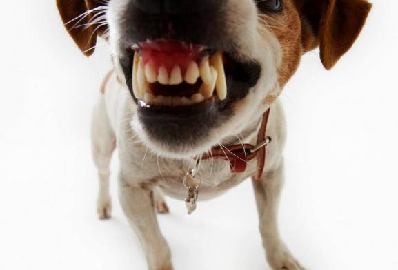 Зачем собакам и кошкам нужны зубы?